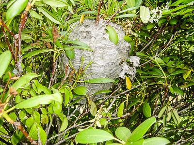 hvepse fjernes nordsjælland